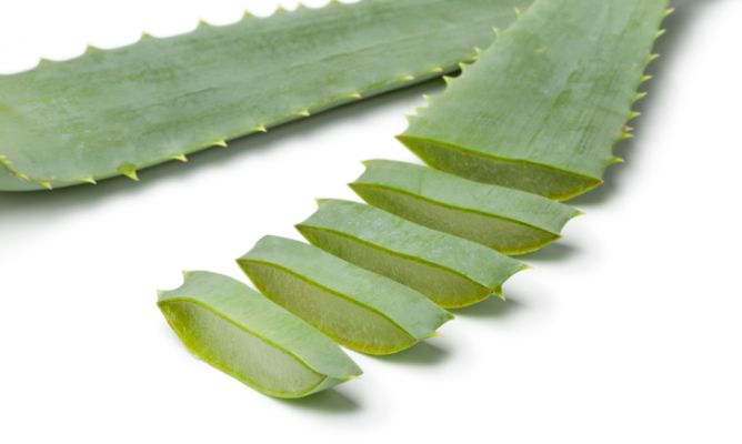 El Aloe vera también es laxante.
