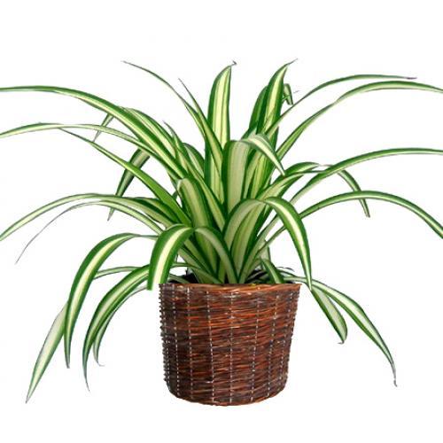 Introduce plantas en casa para purificar tu aire