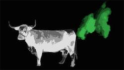 La vaca produce metano