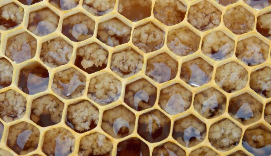 Sabías que... ¿la Jalea Real no es miel? Descubre sus 20 beneficios y cómo se toma correctamente