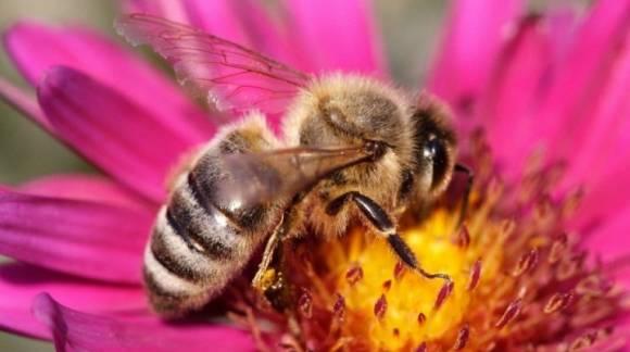 3 productos de las abejas que cuidan de tu salud